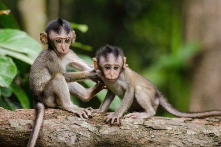 Cztery mądre małpki